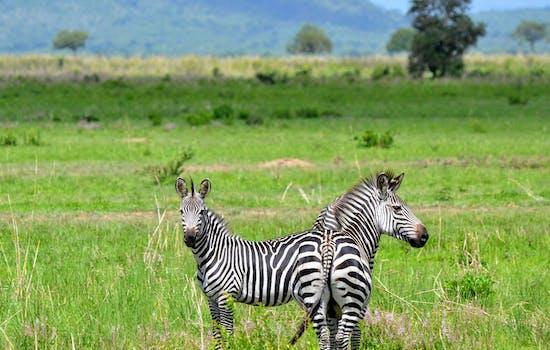 Tanzania holiday